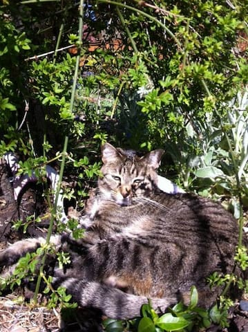 Buchi, our friendly tabby cat, will probably visit for coffee in the morning.