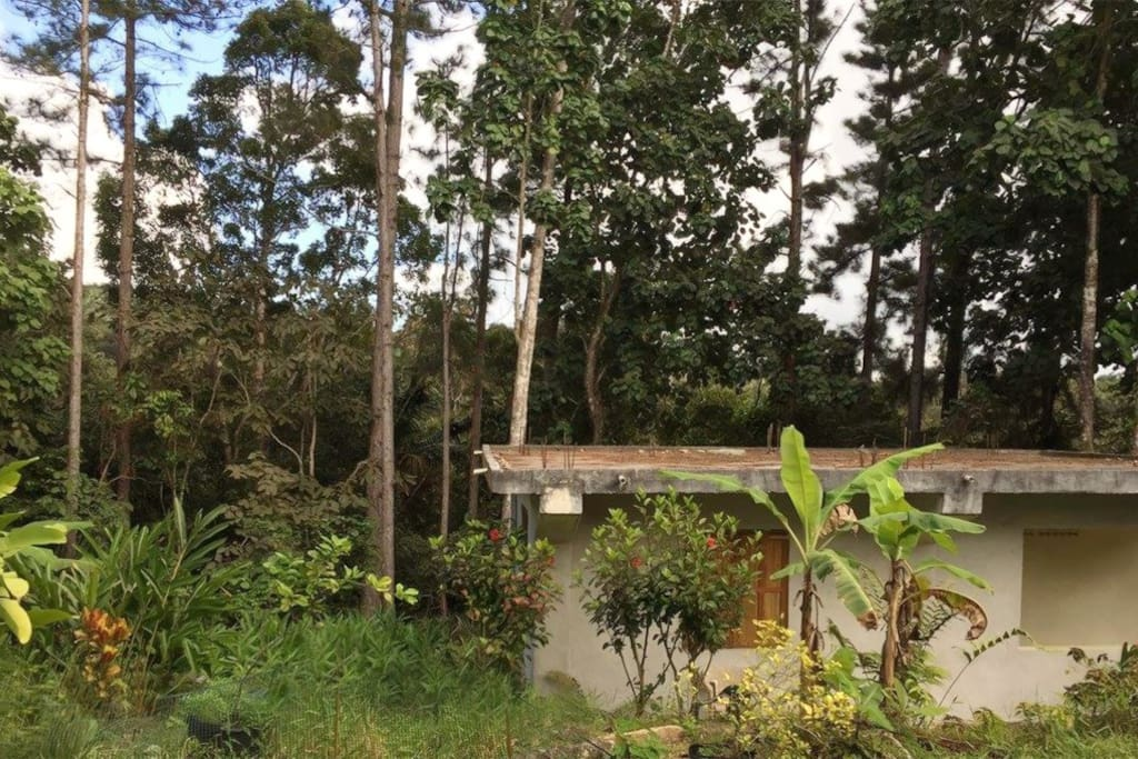 Bunkhouse in The Rainforest