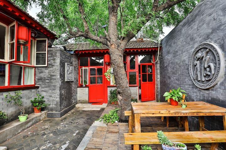 院内百年枣树