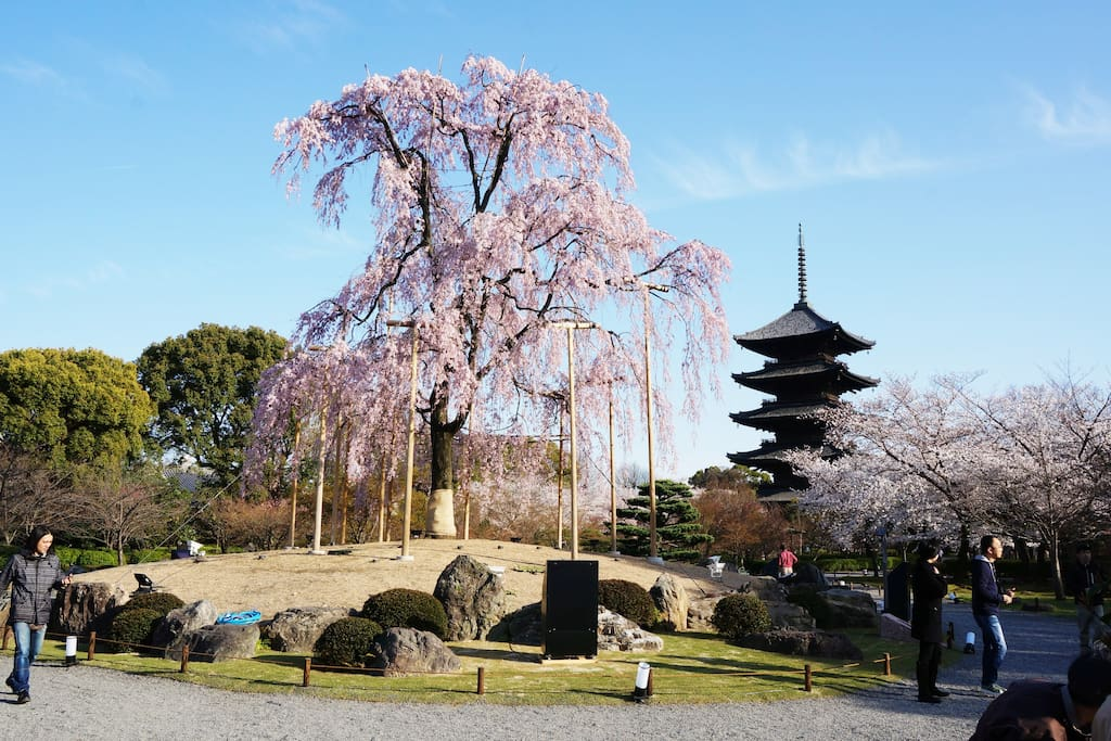 Within 8 min walk from Akaneya KYOTO STATION to Toji Temple, one of the famous World Heritage in Kyoto.