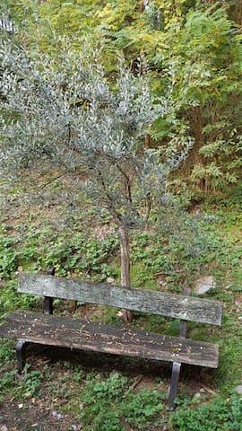 La casina del bosco