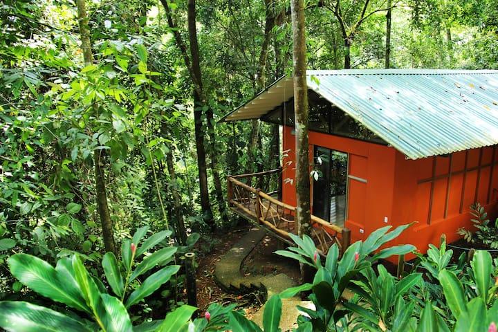 Bungalow inmerso en el Bosque Tropical #2