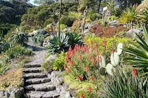 My favourite spot (the succulent garden) in the Botanic Gardens across the road.