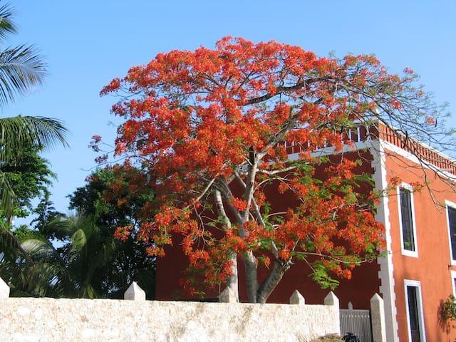 Casa de los Pianos - Uayma - Dom