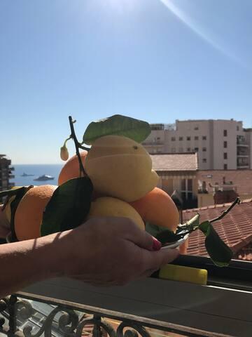 Cosy apartment in Monaco