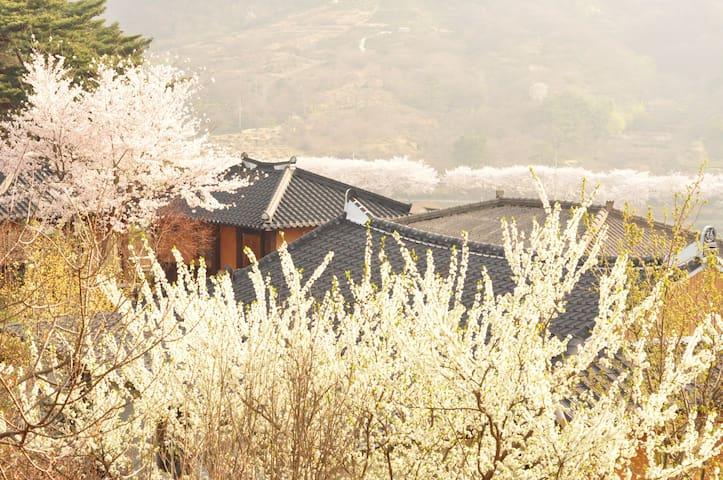 섬진강변 화개장터 매화마을 인근의 한옥 독채 2인실 - Daap-myeon, Gwangyang-si