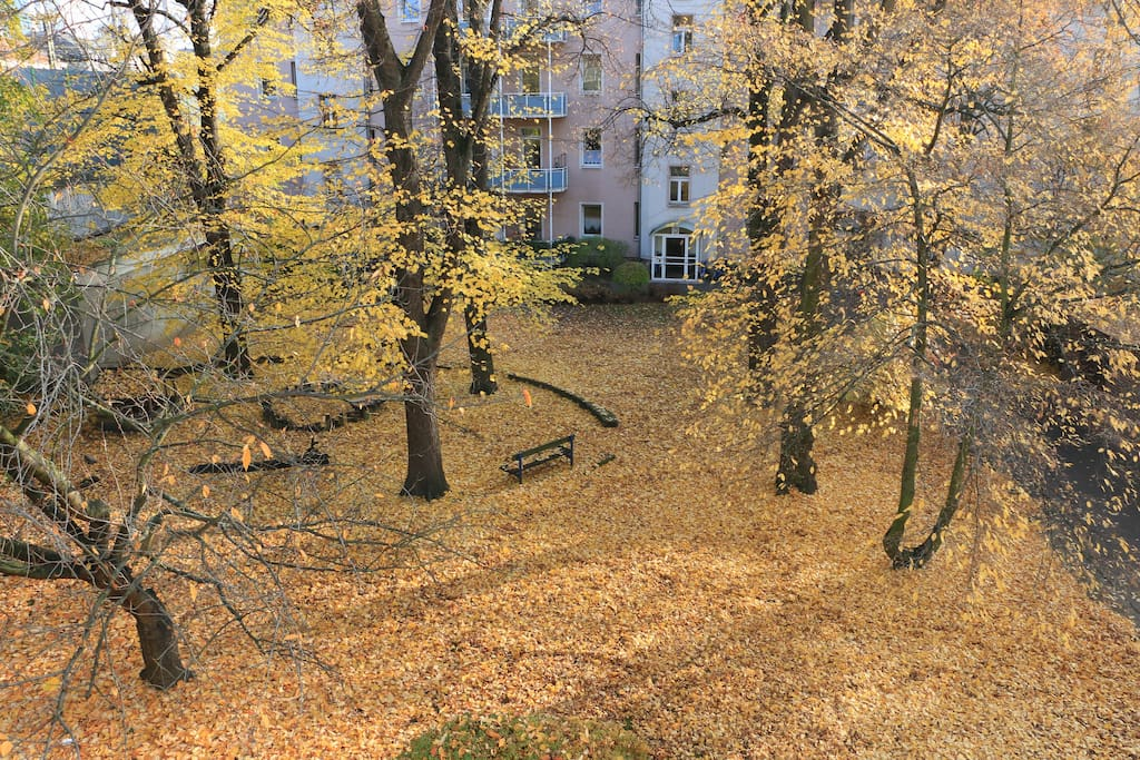 The view from your room to the yard in autumn