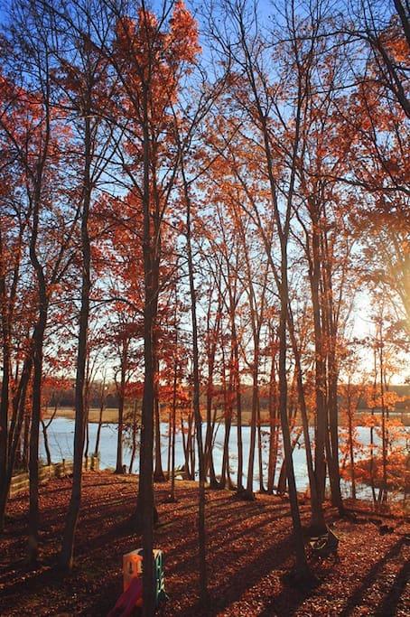View in the backyard in late fall