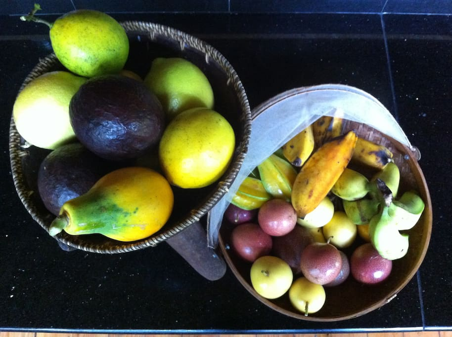 Abundant tropical fruits of the season are available fresh from the trees.