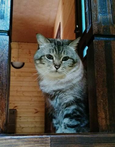 Кошка Леся/Our cat Lesya