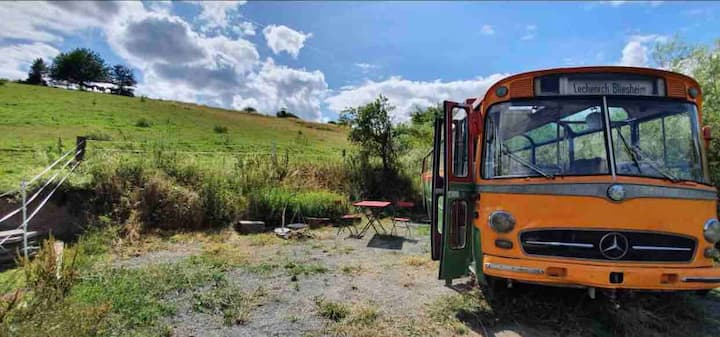 Into the Wild Omni Bus 1963 in the countryside
