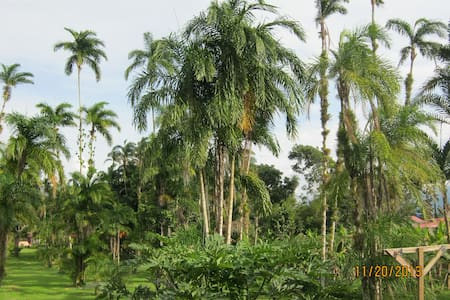 Close to Town - Endless Palm Trees!