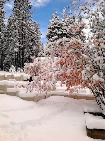 The magic of snow.
