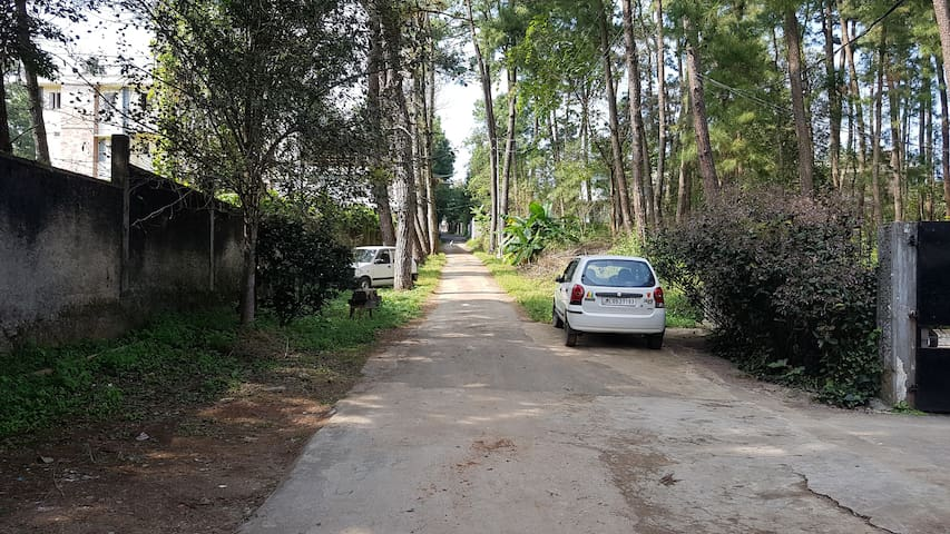 There a couple of houses on the stretch of the road and it is surrounded by trees. The residential neighbourhood is quite, safe and peaceful.