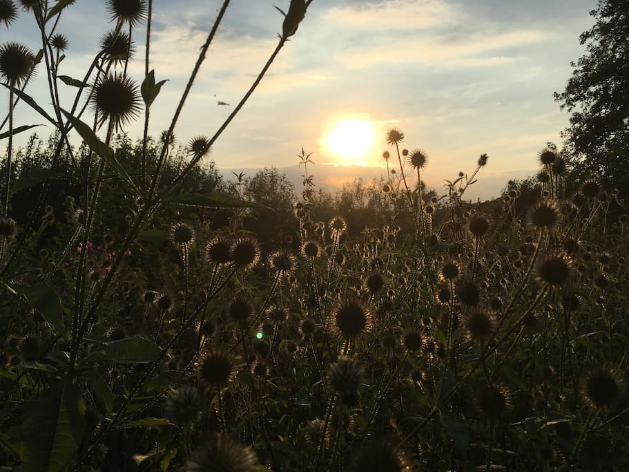 Utterslev mose i aftenlys