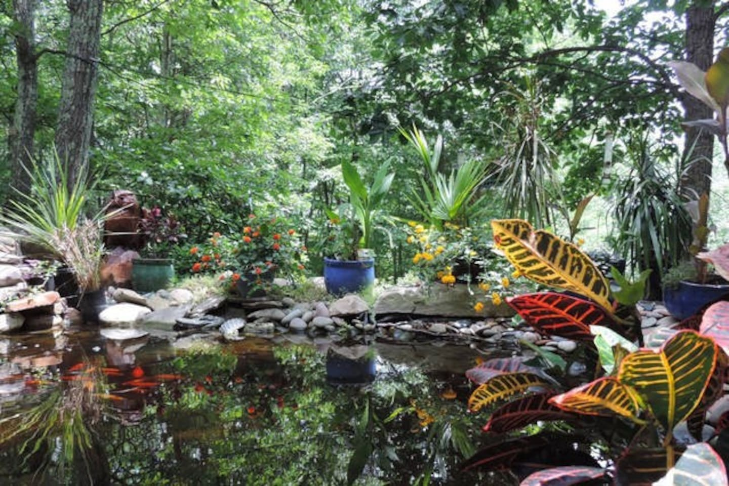 Tropical flowers, blooming in the heat of summer, surround the Koi pond.