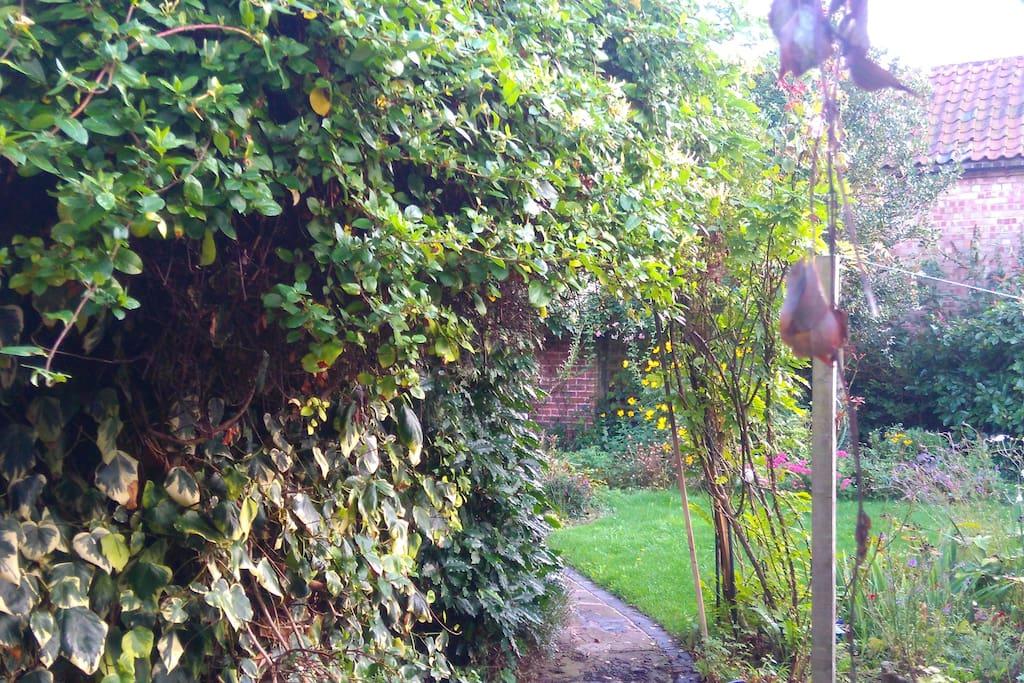 Through gate into garden