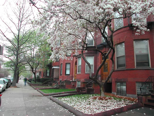 Abigayle's Bed and Breakfast 4A (2 twins or king) - Boston - Bed & Breakfast