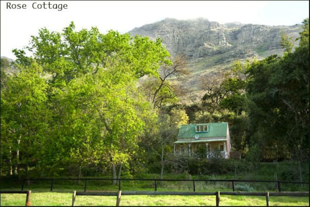 Rose Cottage, with the backdrop of Stellenbosch Mountain