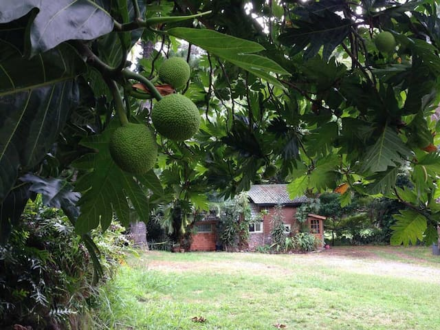 Breadfruit, macadamia nut, tangerine, banana, jack fruit, avocado....all over the property.....