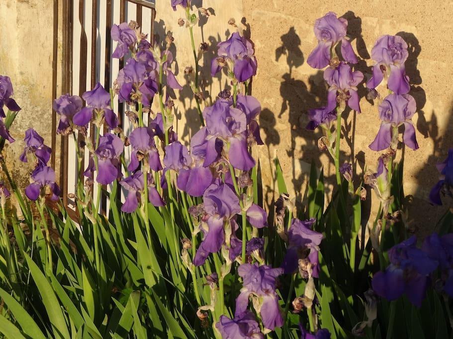 les fleurs à Noyers, plus belles qu'ailleurs!