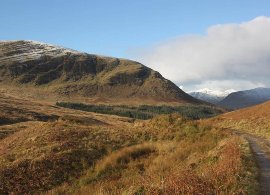 A view up the glen.