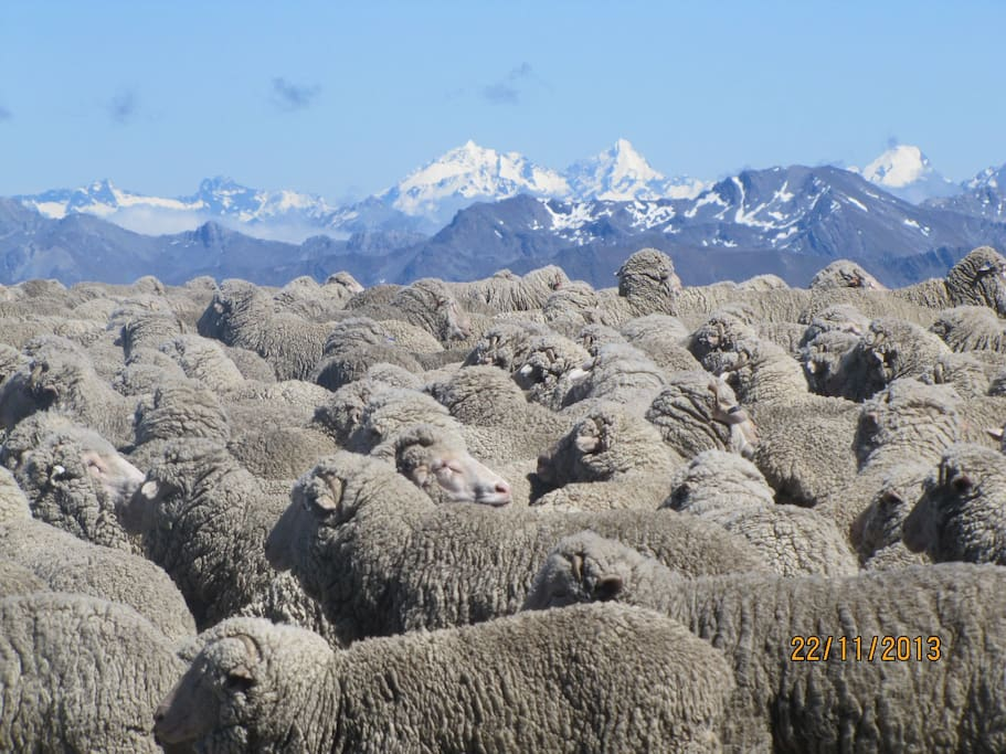 Merinos with a view