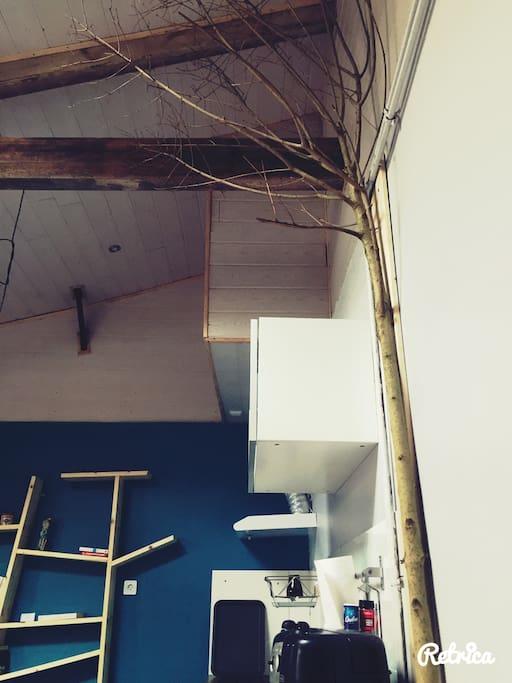 L'arbre de l'espérance