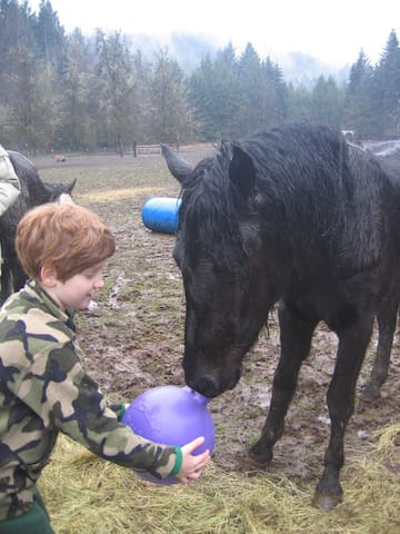 Children really enjoy mingling with the critters on the farm.  Call for appointment to access pasture.