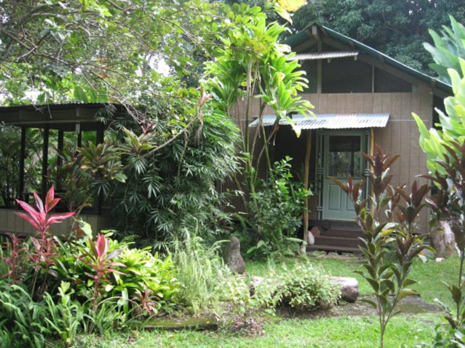 Mango Tree Cottage, our solar cottage, surrounded by bamboo, guava, avocado and multi-colored ti plants.