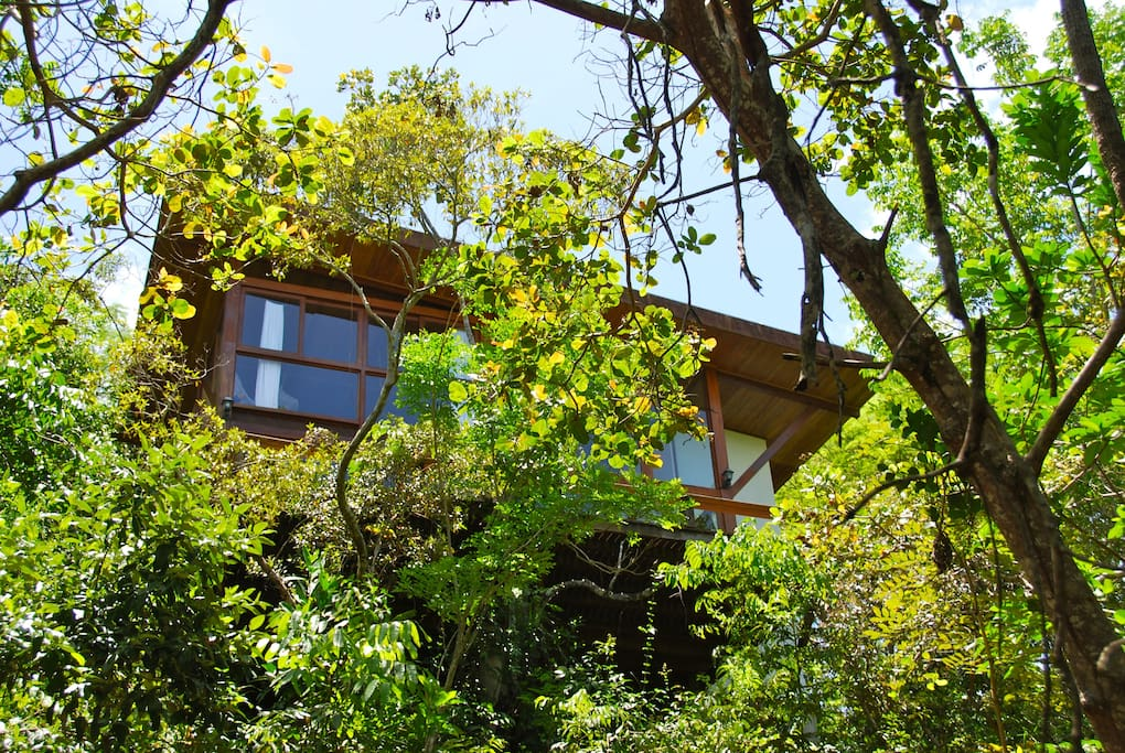Architectural style in wood and glass in the middle of the Atlantic Forest