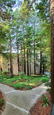 Resort style w views of wonderful serine redwoods