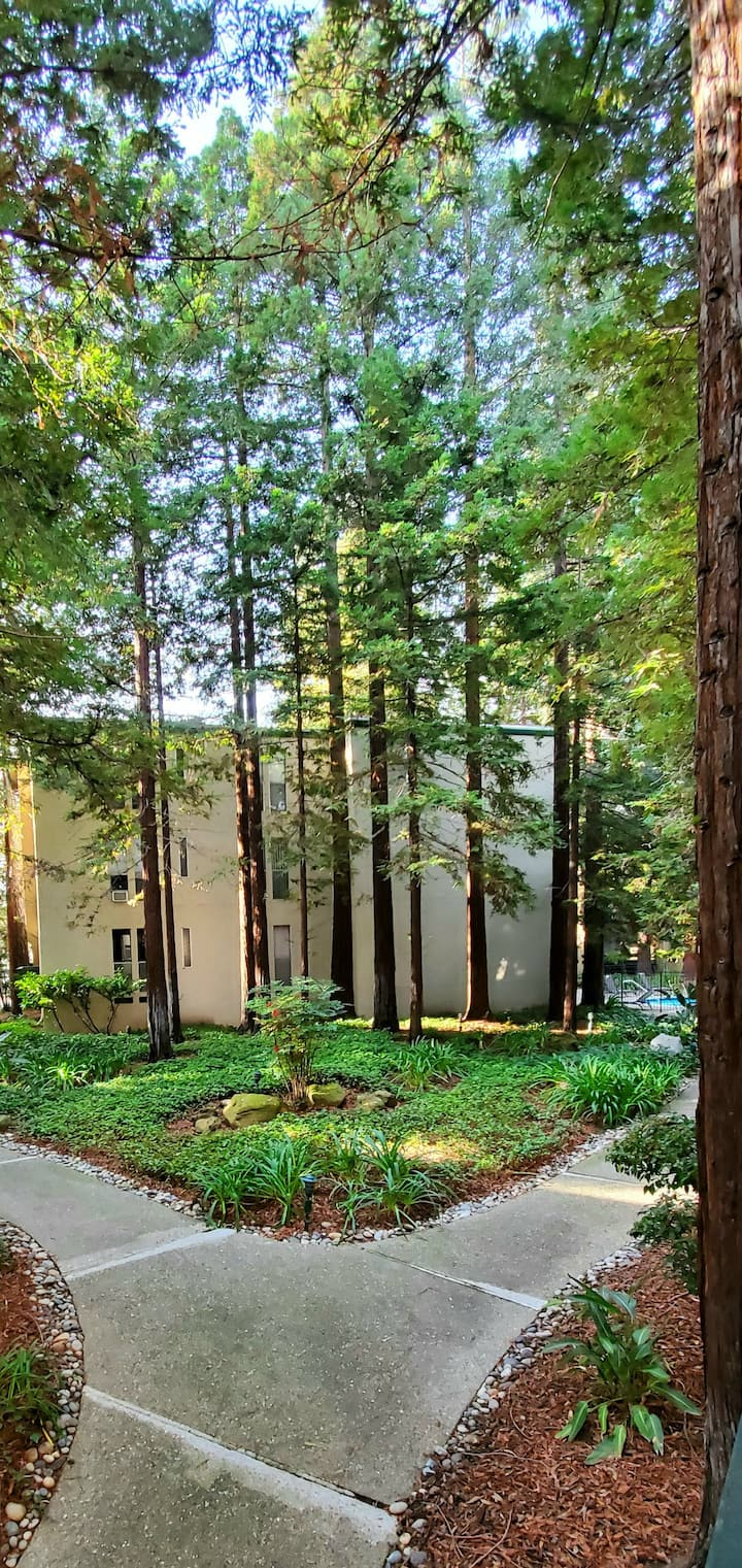 Resort style w views of wonderful serine redwoods