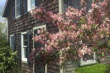 Front of house with tree in bloom
