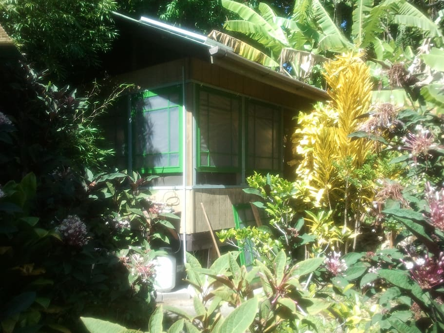 The Banana Patch Cottage immersed in the wild abundance of nature