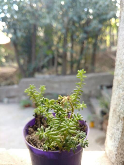 Amamos y cuidamos las plantas! <3