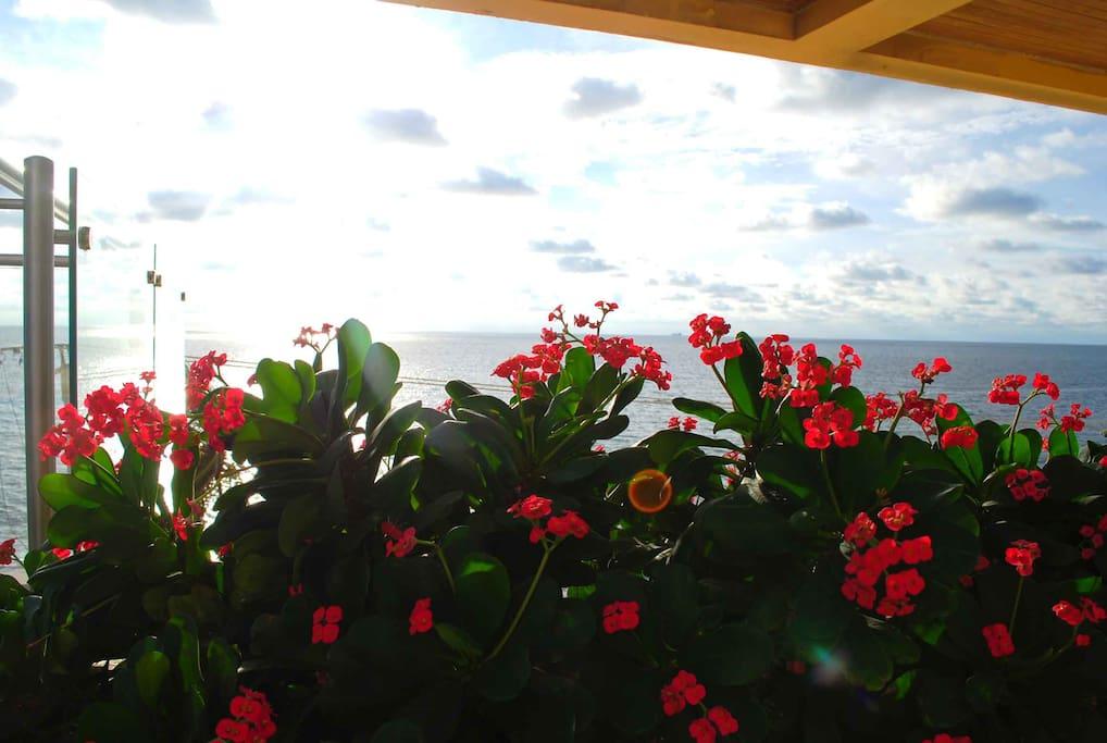 Flores cerca de la piscina con vista al mar