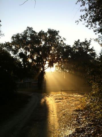 Forest Retreat Sanctuary