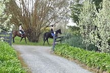 How lovely  to see neighbours out enjoying the day on the horses. Love the sound if clip clop of horses hooves.