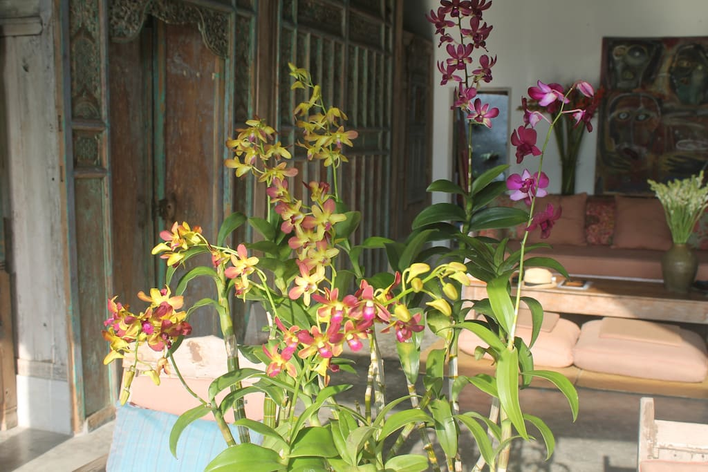 Detail of orchids in entry.