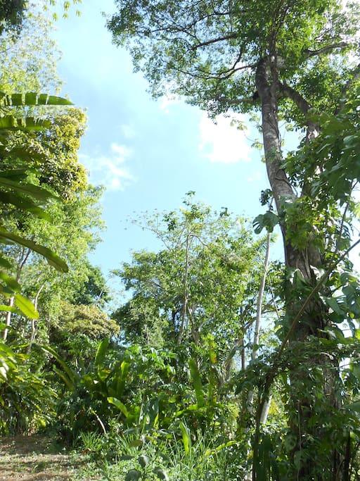 Tree canopy along Trail #2