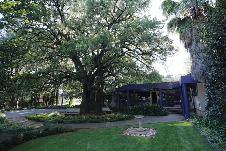 Big Tree B&B and GH - Grace Room
