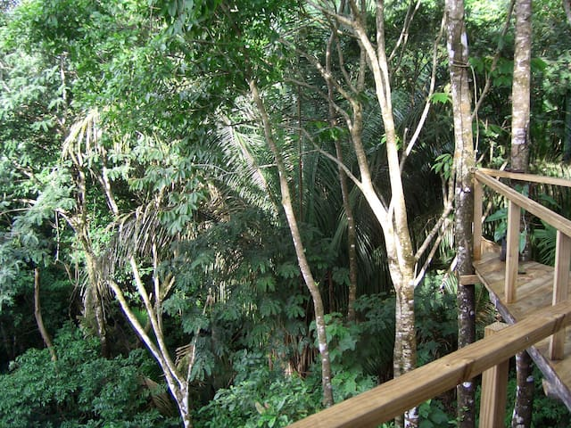 Porch with jungle view, welcome to the real Costa Rica !!