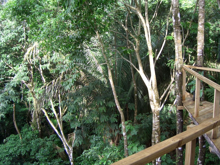 Tree house manuel antonio with great pool cottages for Tree house for sale costa rica