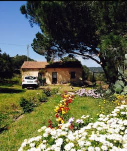 Enjoy your summer holiday with your dog ,too - Province of Olbia-Tempio
