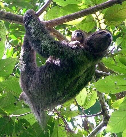Sloths close to reach...