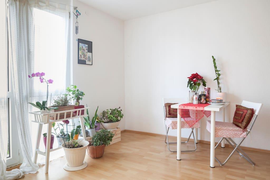 Sunny room(20qm)in central Freiburg