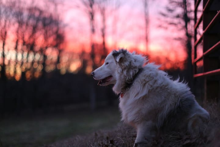 Double Merle Farm