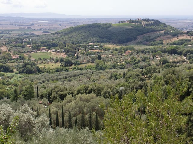 Sea & olive trees - view & comfort - Campiglia Marittima - อพาร์ทเมนท์