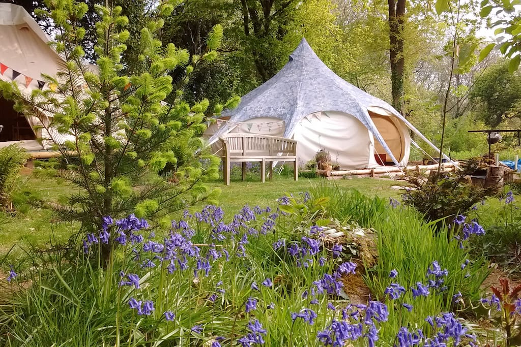 Pretty woodland setting with larger (5m) Lotus Belle